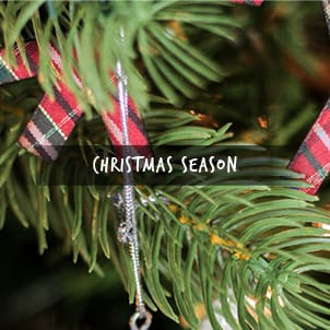 Christmas Tree Tips and Guides
