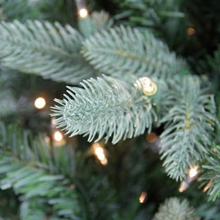 PE tree branch