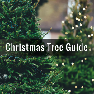 5-xmas-tree-guide.png