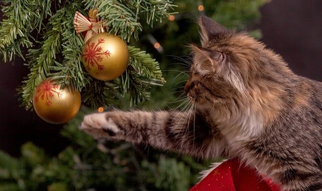 Cat Reaching for Christmas Ornaments